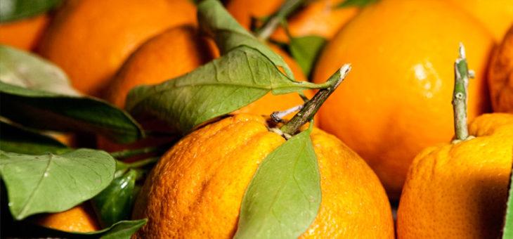 Vendita solidale delle arance