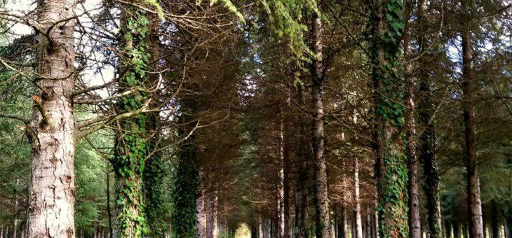 """Escursione """"Parco della Cellulosa: Il bosco segreto"""""""