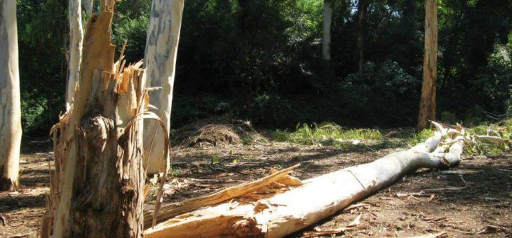 Danneggiamenti Tromba d'aria a Casalotti – Parco della Cellulosa