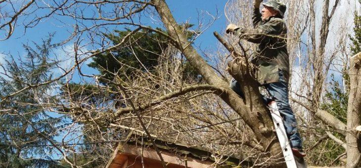 Potatura alberi al Parco della Cellulosa